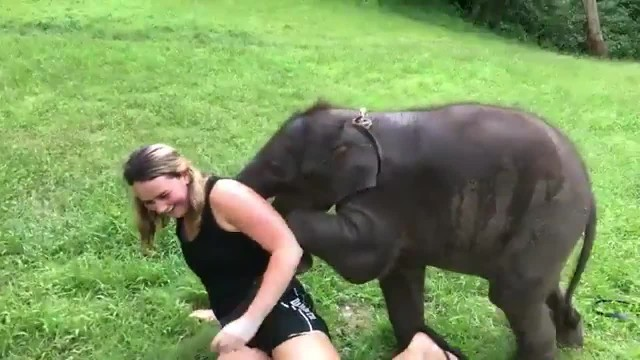 Baby Elephant Cant Stop Hugging Tourist