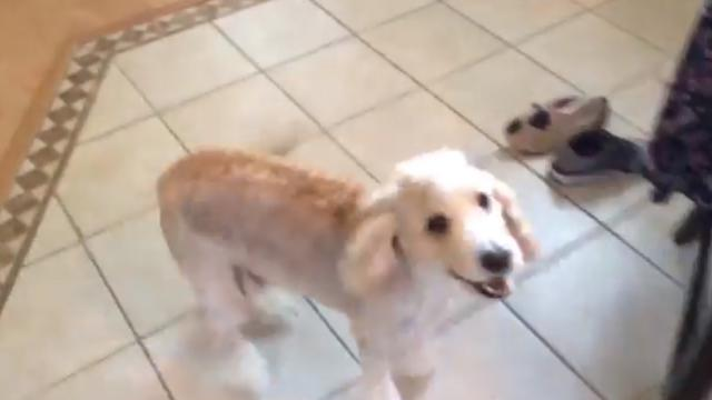 Adorable Dog Has The Cutest Dinner Dance Ever Which Is Sure To