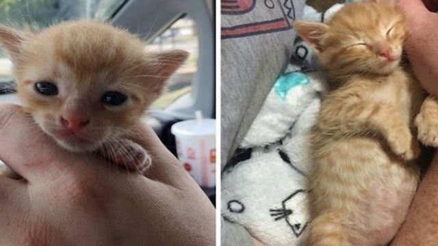 Kitten saved from middle of street gets second chance