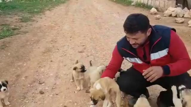 The Cat Man of Aleppo loves dogs, too