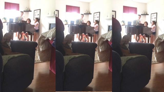 Adorable Moment Tuneful Beagle Sings Along With Family's Piano Recital