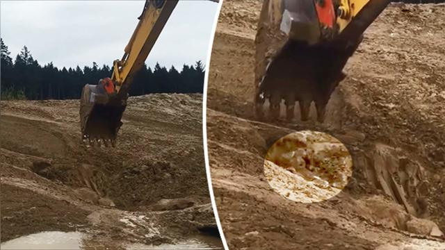 Construction workers see unusual thing moving around in