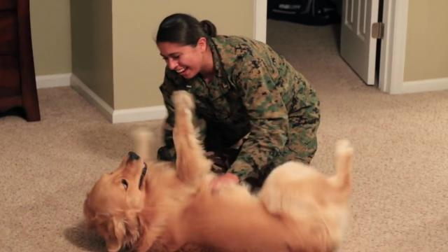 Adorable Golden Retriever Welcomes Marine Home