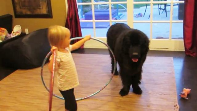 Toddler tries teaching dog to Hula Hoop