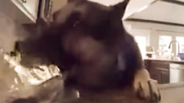 Security Camera Catches Cheeky Dog Stealing Peanut Butter Fudge