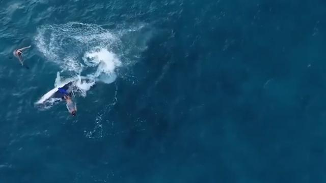The Incredible Moment a Woman Swims With a Playful Baby Humpback Whale
