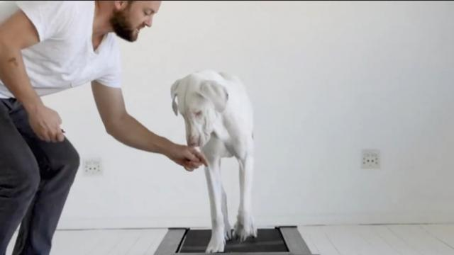 Must-See Time-Lapse Of Rescued Puppy Growing Up On A Treadmill