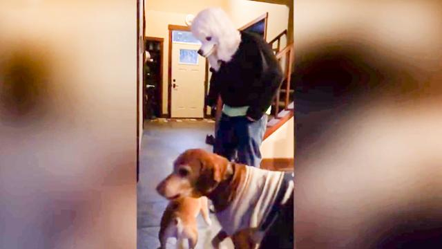 Dad freaks out dogs with a $10 poodle mask from Amazon