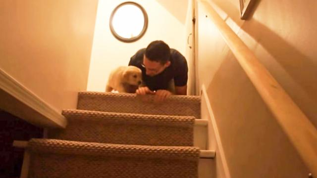 Hobbes the Puppy Learns to Go Down The Stairs