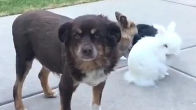 Jealous dog intentionally photobombs video of baby rabbits_Large