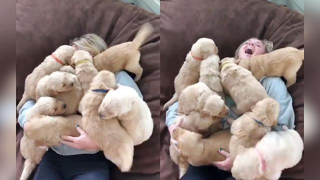 This Cute Video Of A Girl In The Middle Of A Puppy Pile Will Warm Your Heart