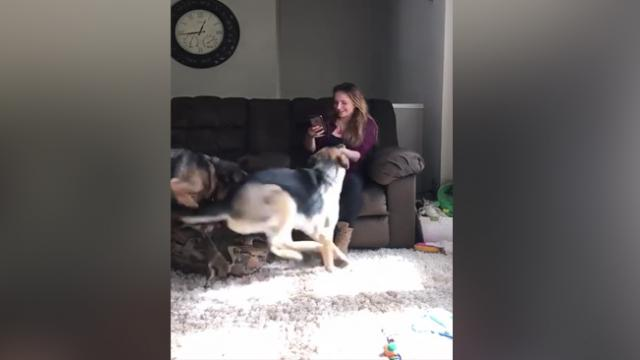Soldier Returns Home From Military Service. Now Wait For Her Dogs To Realize She's Back
