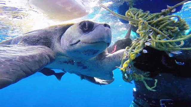 GoPro- Diver Saves Sea Turtle