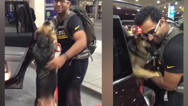 Try Not to Cry When You See These Owners and Dogs Reunite