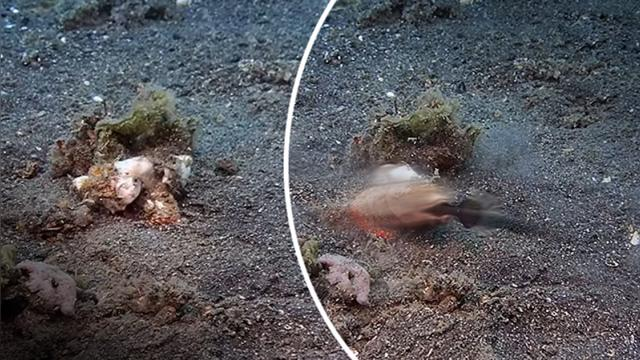 This dangerous sea predator is almost invisible—watch when