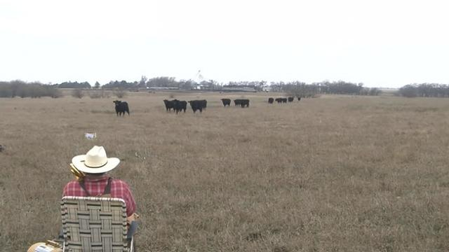 Farmer Calls His Cattle by Playing 'Jingle Bells' on a Trombone and Offers Them a Surprise Gift of P