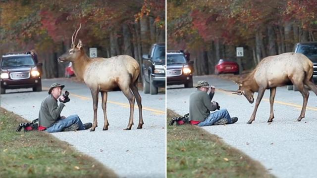 Things get intense when elk headbutts the photographer The