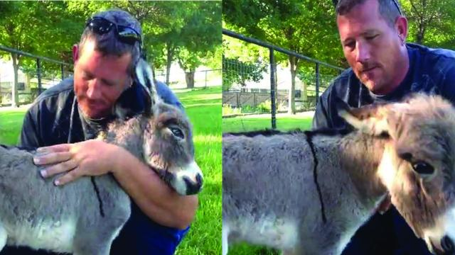 This Newborn Donkey Asks For Hugs In The Cutest Way_Large