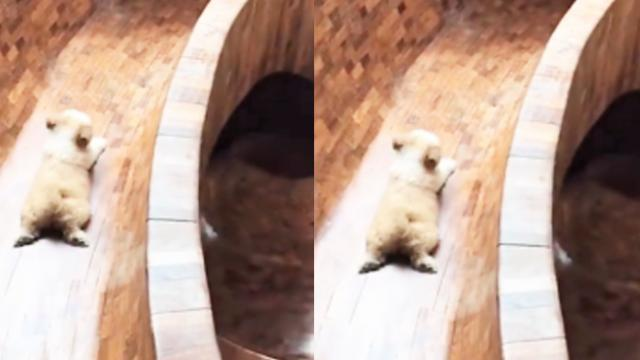 The home owner built this slide for his dog when he discovered that he loved slides. - YouTube_2
