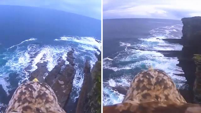 Breathtaking birds-eye view of beaches and cliffs revealed through eagle in flight