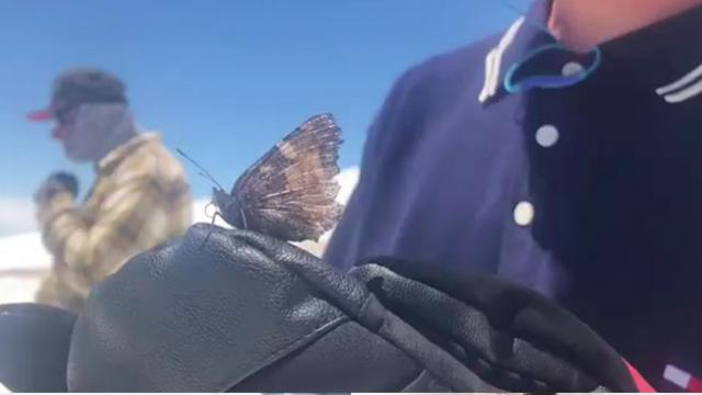 Snowboarders Ride Through Thousands of Butterflies on Mt Hood;