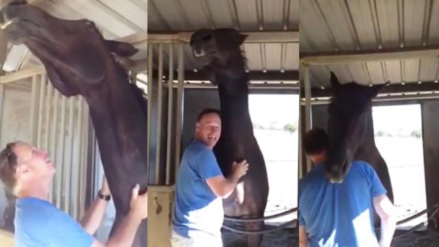 He Started Petting His Horse On The Neck. The Horse's Reaction- I Can't Stop Laughing!