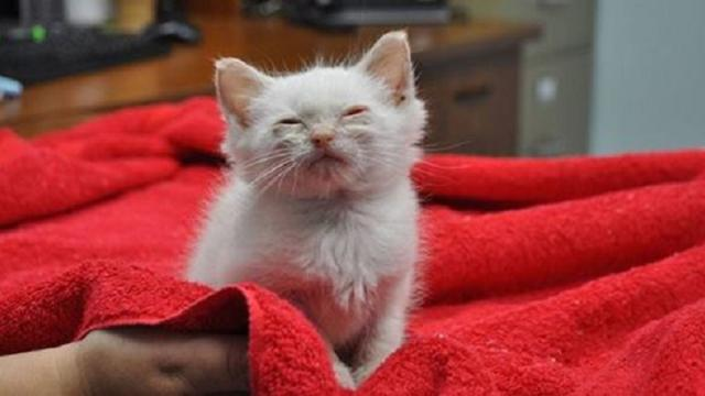 Tiny Kitten Rescued Off the Street, Feels Love for the First