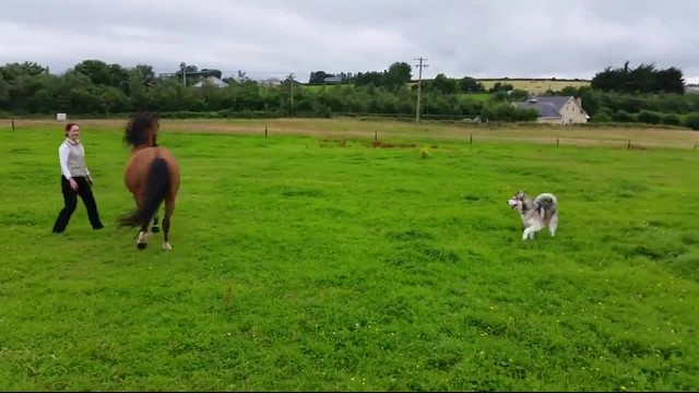 Beautiful Horse Plays In The Field But His Friends Are The Ones Making The Internet Smile