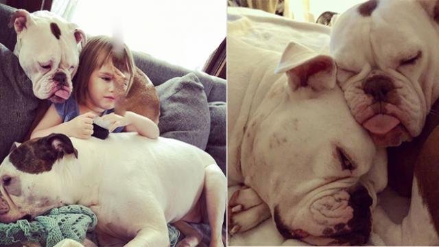 Gentle Dog Helps Little Girl Heal After She Loses Her Dad