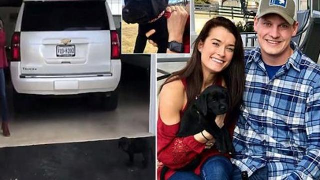 Woman gets surprised with romantic puppy AND proposal -