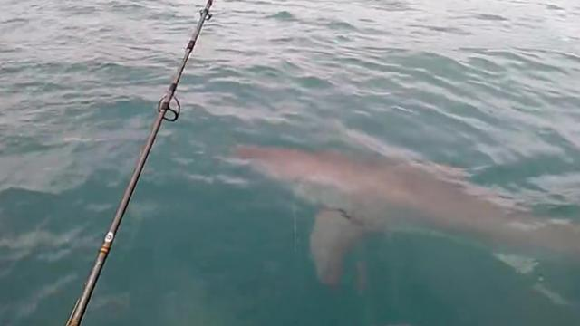 Fishermen Film Chilling Interaction With 15ft Great White Shark