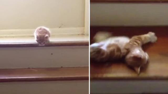 Precious kitten somersaults down the stairs in adorable stairs fail!