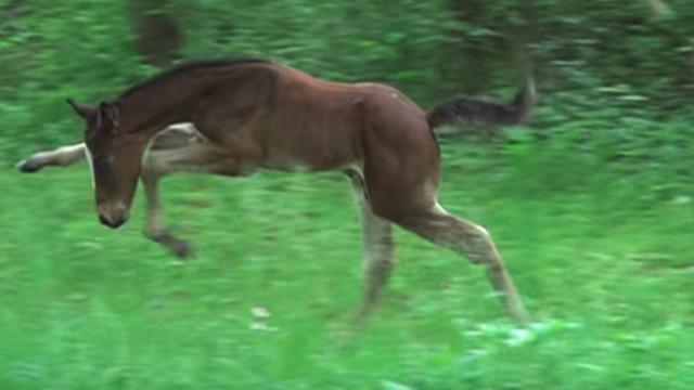 Watch This Baby Horse Play Outside For The First Time. Too Cute!