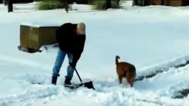 Dogs Helping Their Owners to Shovel Snow Compilation