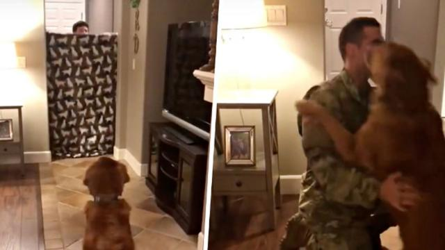 Dogs Reaction To Soldier Dads Return Home Has The Internet Talking