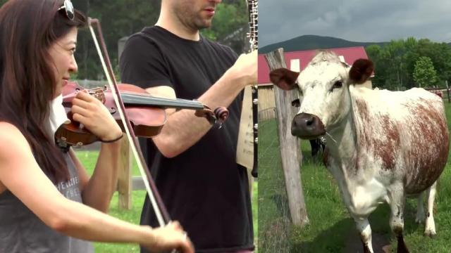 Concert for Cows by Bovine Music Appreciation Society1