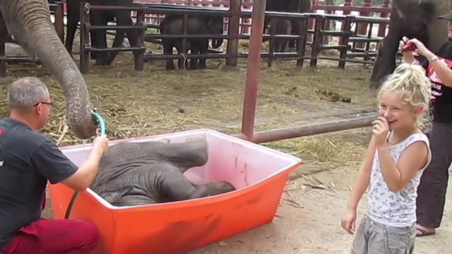 Baby Elephant Bathing Double trouble