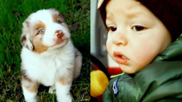 Adorable Aussie Puppy and Toddler Do Everything Together