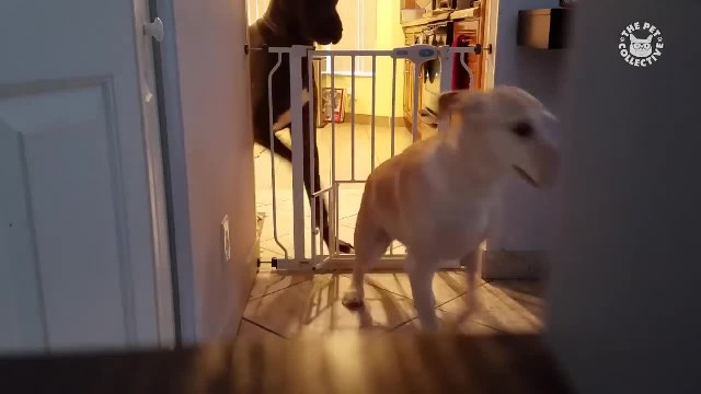 These Pets Are Plotting Their Great Escape!