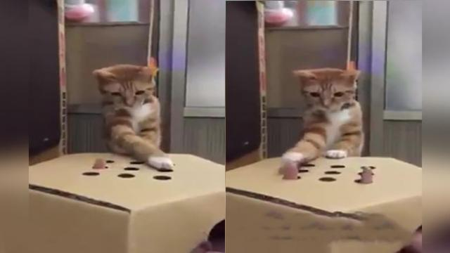 Daring Human Lets Her Curious Orange Kitten Play a Game of 'Whac-a-Mole' With Her Fingers