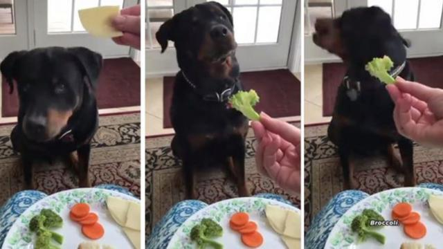 Hilarious dog says No to broccoli and carrot but says Yes to