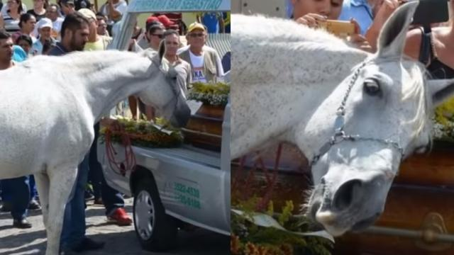 Horse Lays His Head On Coffin As He Mourns The Loss Of