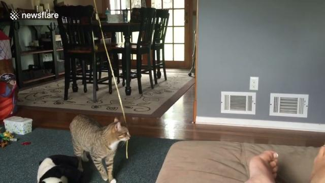 Cheeky cat steals little boy's balloon