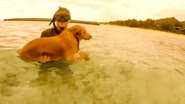 Doggo Needs Rescuing After Swimming Out to Follow Snorkelers
