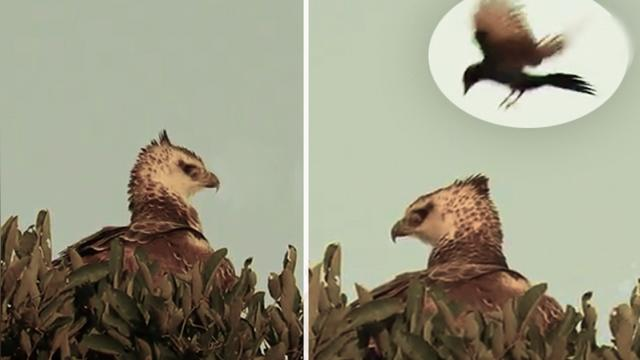 This brave & determined little bird has a bizarre landing