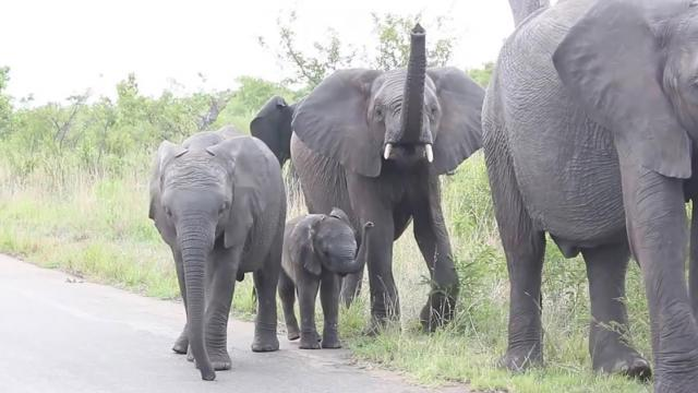 Baby elephant takes issue with its trunk — and its beyond cute_Medium