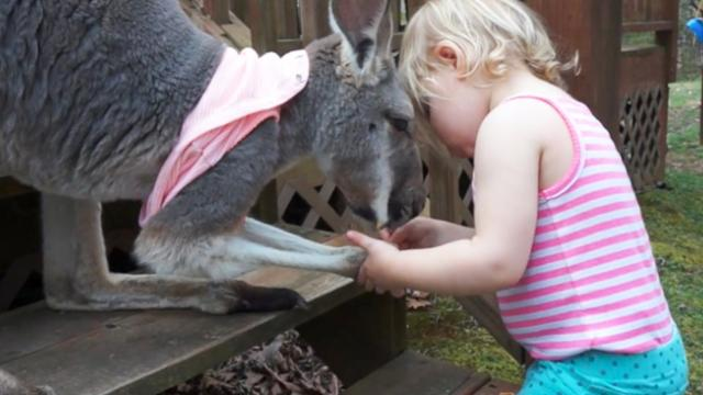 Brother And Sister Form Remarkable Friendship With A Kangaroo