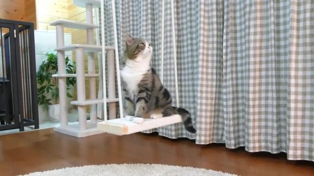 Maru the cat conquers the swing