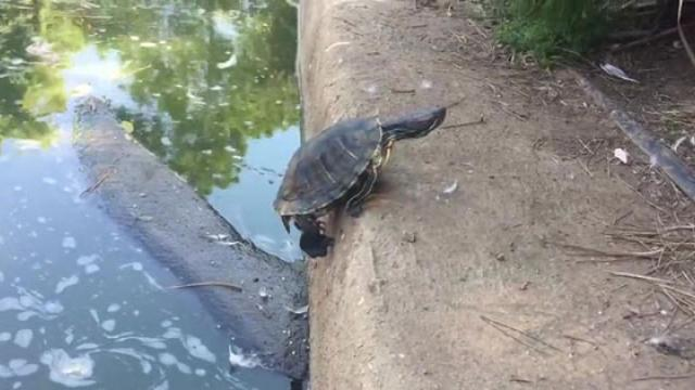 The 5 Funniest Videos Of Turtles You Will Ever See_Medium