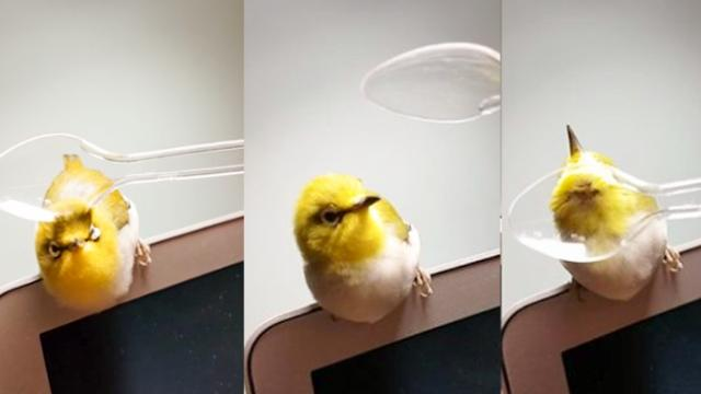Pampered bird gets relaxing spoon massage